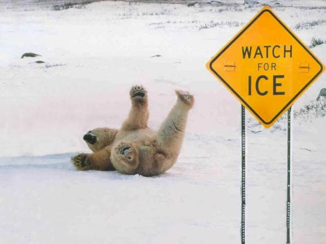gpolar-bear-slipping-on-ice